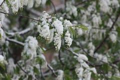 Drzewo w śniegu pierwszy precypitacja Zima Zdjęcia Stock