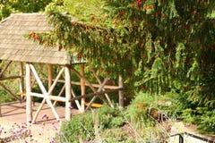 Drzewo w ogródzie Obraz Stock