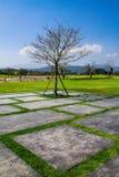 Drzewo w ogródzie Obrazy Royalty Free