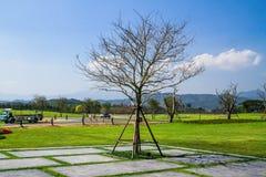 Drzewo w ogródzie fotografia royalty free