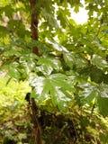 Drzewo w ogródzie z deszczem Obraz Stock