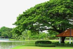 Drzewo w parku Obrazy Royalty Free