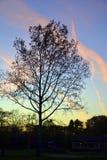 Drzewo w parku zdjęcia stock