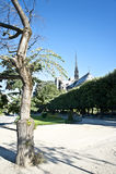 Drzewo w Parku Notre Damae Zdjęcie Royalty Free