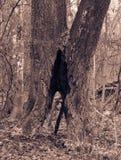 Drzewo w parku z zagłębieniem Zdjęcia Royalty Free