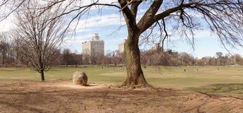 Drzewo w perspektywa parku w Brooklyn, Nowy Jork miasto obrazy royalty free