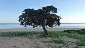 Drzewo w plażowym krajobrazie Zdjęcie Royalty Free