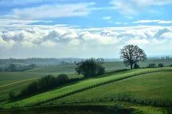 Drzewo w polu Zdjęcia Royalty Free