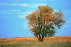 Drzewo w polu Obraz Royalty Free