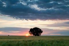 Drzewo w polu Fotografia Stock