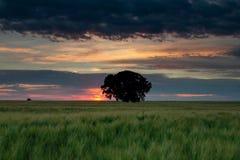 Drzewo w polu Fotografia Royalty Free
