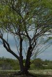 Drzewo w polu pod chmurnym niebem zdjęcia stock