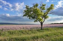 Drzewo w pustyni. Fotografia Royalty Free