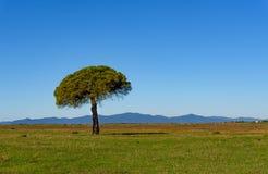 Drzewo w równinie Zdjęcie Royalty Free