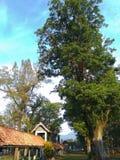 drzewo w ranku Obraz Royalty Free