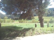Drzewo w ruchu Obraz Stock