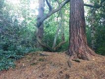 Drzewo w słońca świetle Zdjęcia Royalty Free