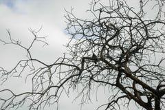 Drzewo w Savana Zdjęcia Royalty Free
