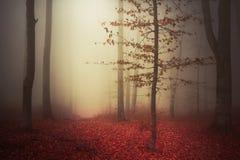 Drzewo w tajemniczych drewnach podczas jesieni Obraz Stock