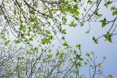 Drzewo w tle niebo Fotografia Stock