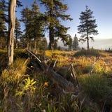 Drzewo w trawie w lesie Zdjęcie Stock