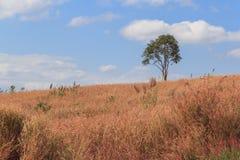 Drzewo w trawy polu Obraz Royalty Free