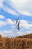 Drzewo w trawy polu Zdjęcia Royalty Free