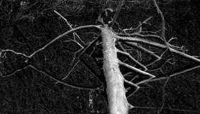 Drzewo w watter Zdjęcia Royalty Free
