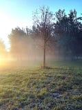 Drzewo w wczesnym zima ranku S?o?ce promieni przerwa przez mg?y fotografia stock