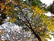 Drzewo w wieczór Fotografia Royalty Free