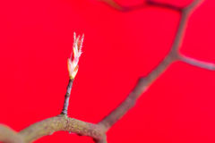 Drzewo w wiosna Obrazy Royalty Free