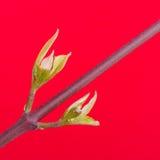 Drzewo w wiosna Zdjęcie Royalty Free