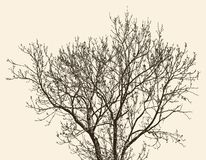 Drzewo w wiosna Zdjęcia Stock