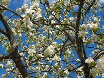 Drzewo w wiosna Zdjęcie Stock