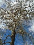 Drzewo w wiosna Fotografia Royalty Free