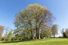 Drzewo w wiosna czasie Obrazy Royalty Free