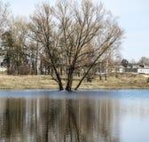 Drzewo w wodzie Zdjęcia Stock