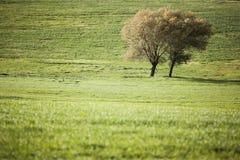 Drzewo w wsi Fotografia Stock