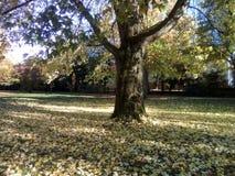Drzewo w Zachodnim parku w Dortmund obraz stock