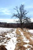 Drzewo w zima Obrazy Royalty Free
