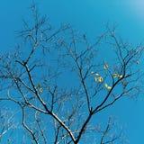 Drzewo w zima ranku Obraz Royalty Free