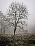 Drzewo w zima ranku mgle z Powraca wzdłuż zatoczki zdjęcie stock