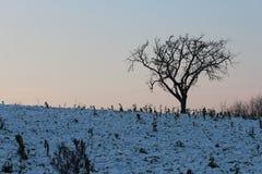 Drzewo w zimie Fotografia Stock