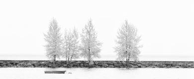 Drzewo w zimie Fotografia Royalty Free