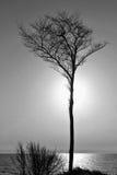 Drzewo w zmierzchu Obrazy Stock