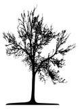 Drzewo (wektor) obrazy stock