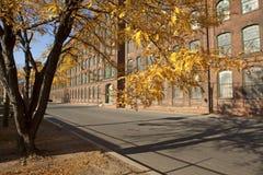 Drzewo wewnątrz od fabryki, bydło Fotografia Stock