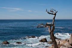 drzewo więdnący Zdjęcia Stock