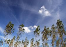 drzewo wiatr fotografia stock