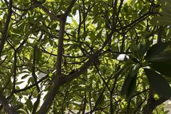 Drzewo widzieć od bellow obrazy royalty free